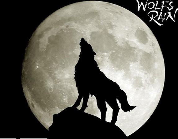 关于狼的签名